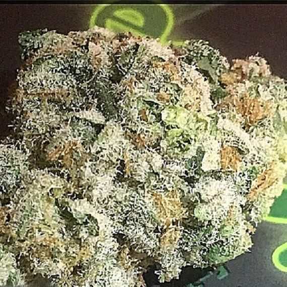 ORANGE SHERBERT 22%THC